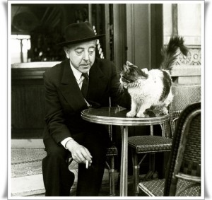 paris-entre-chats2