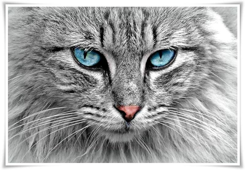 0 котка