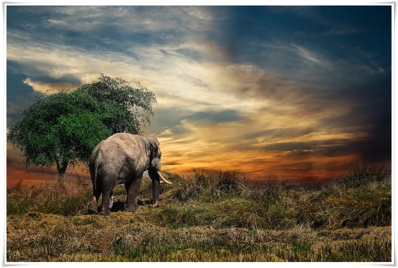 elephant-2729413_960_720